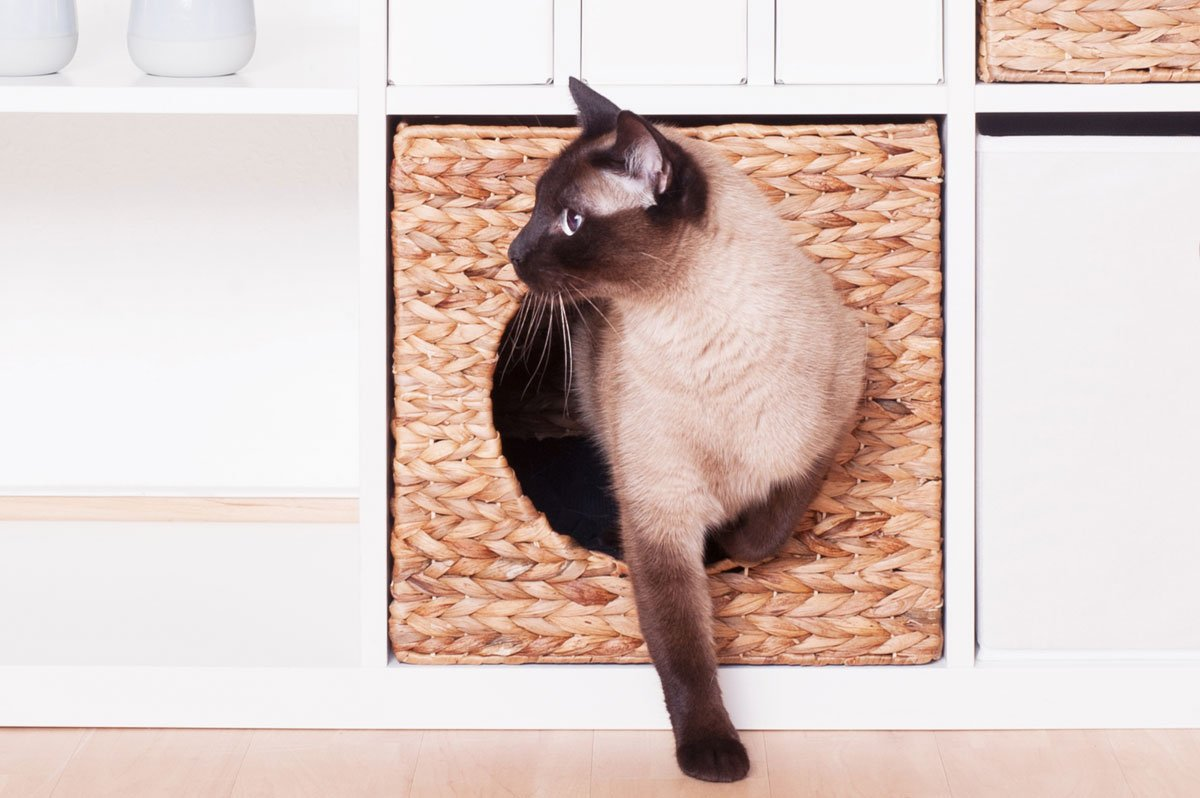 Ikea Kallax gato Cesto jacinto de agua animales de 33 x 33 x 33 cm natural animales cueva gato cueva Gatos Cesta plegable caja Flechtwaren y muy resistente.