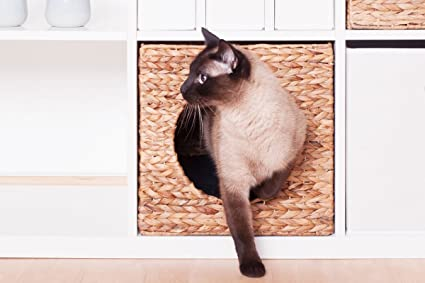 Ikea Kallax gato Cesto jacinto de agua animales de 33 x 33 x ...