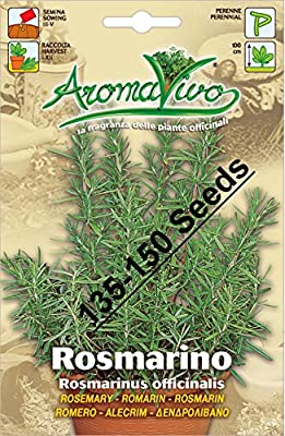 Rosemary Herb Seeds (135 - 150 seeds) Best Quality Very Fresh seeds.