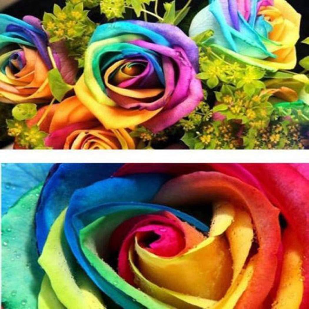 Jardin Patio Balcon Sisaki Seed,100 pcs Arc en ciel Rose Graines Ornementales Rares Jardin Graine de fleur pour Accueil