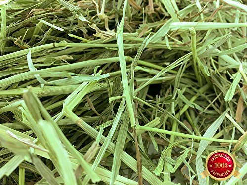 Rabbit Hole Hay First Cut Timothy Hay