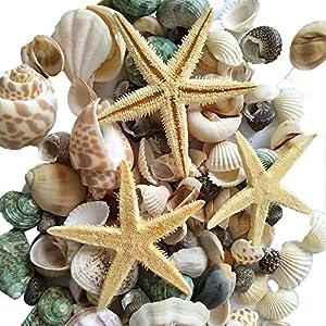 61-i42ashvL._SS300_ Seashell Wedding Favors & Starfish Wedding Favors