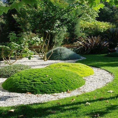 Amazon Com Irish Moss Ground Cover Seeds Sagina Subulata 200