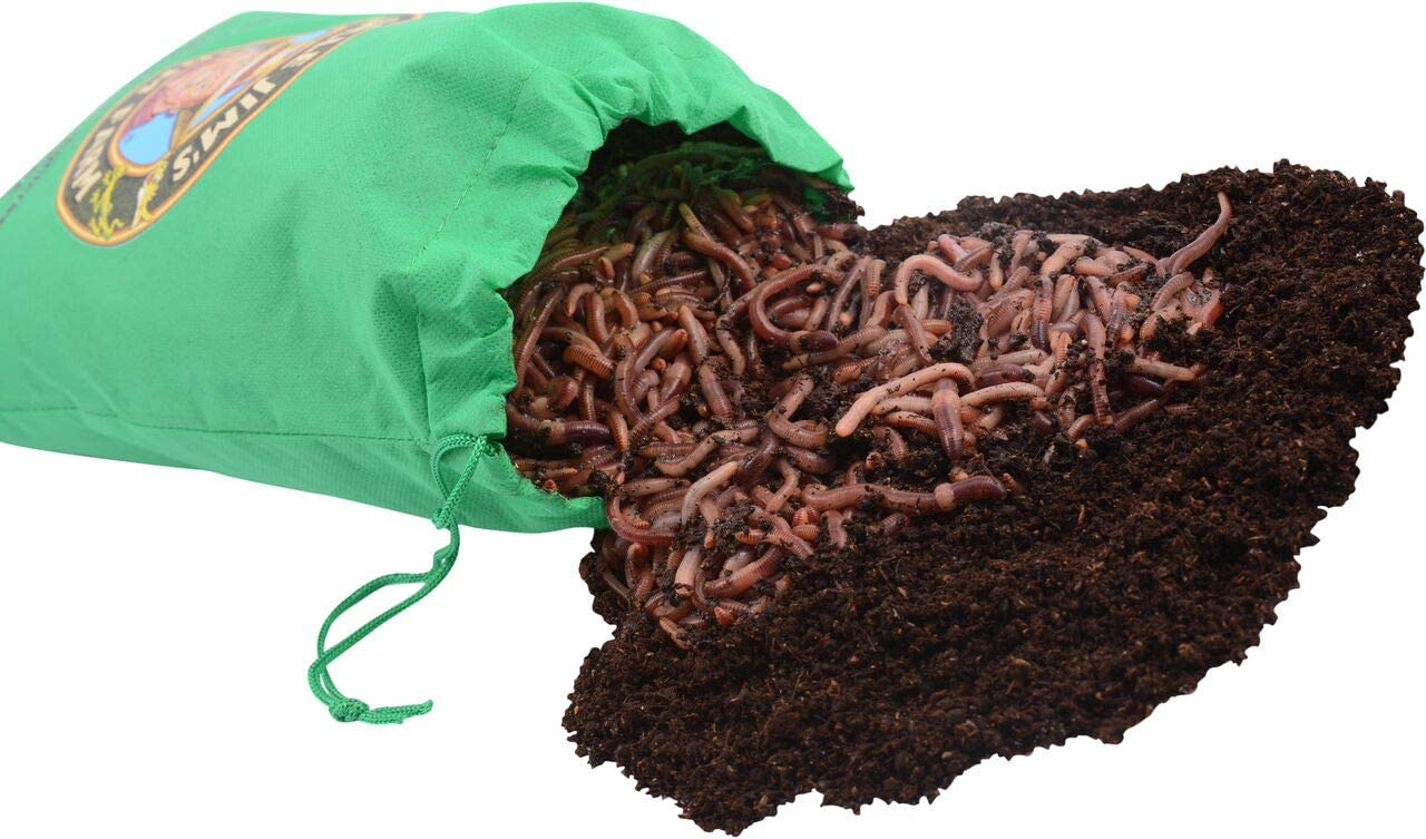 Amazon Com Uncle Jim S Worm Farm European Nightcrawlers Composting And Fishing Worms 2 Lb Pack Home Kitchen