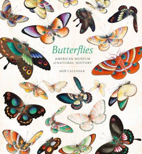 Butterfly Calendar - Butterflies 2018 Wall Calendar
