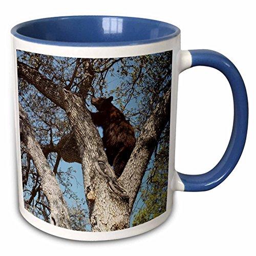 3dRose Danita Delimont - Bears - USA, California, Black Bear in Oak Tree - US05 GRE0031 - Gerry Reynolds - 15oz Two-Tone Blue Mug (mug_142678_11)