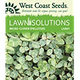 Lawn Solutions - Micro-Clover (Pelleted)