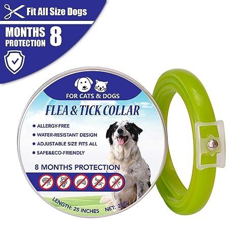 Nuevo Collar Para Mascotas/Gatos/Perros, 8 Meses De ...