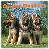 German Shepherd Puppies 2018 12 x 12 Inch Monthly Square Wall Calendar, Animals Dog Breeds Puppies (Multilingual Edition)