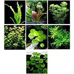 20 Live Aquarium Plants / 7 Different Kinds - Amazon Swords (2 kinds), Egeria, Cryptocoryne and much more! Great plant sampler for 5-6 gal. mini- tanks!