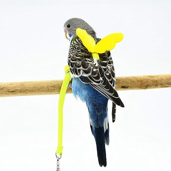 Wide.ling - Arnés para pájaros y Loro para Entrenamiento al Aire ...