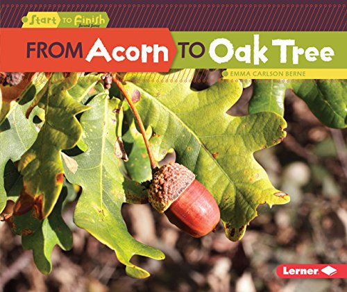 From Acorn to Oak Tree (Start to Finish)