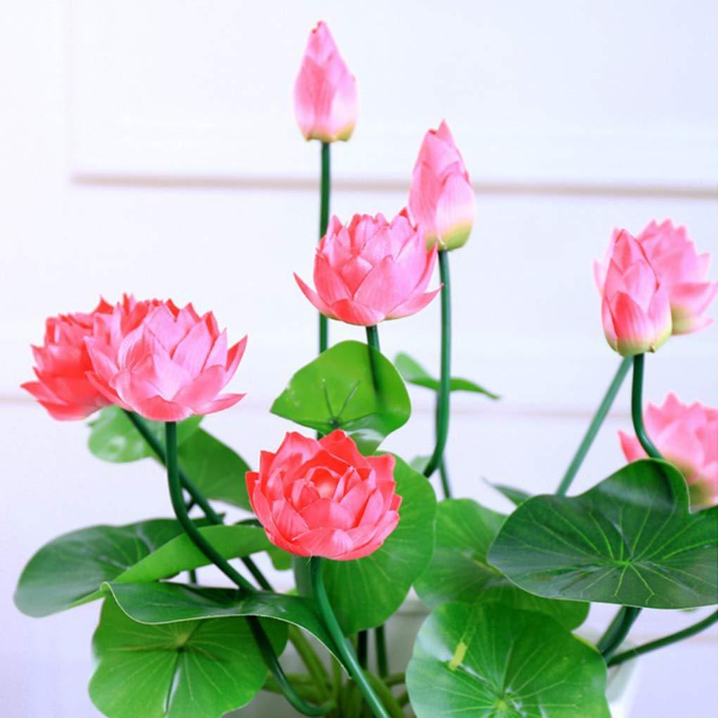 60Pcs Bowl acquatica Fiori Piante Semi Bel Fiore Ninfea Bonsai Seeds 40Pcs Jinzuke 20Pcs