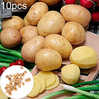 WskLinft 10Pcs Potato Seeds Garden Sweet Nutrition Delicious Vegetable Bonsai Plant for Indoor and Outdoor All Seeds are Heirloom, 100% Non-GMO!s - 10pcs Potato Seeds : Garden & Outdoor