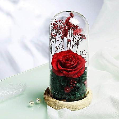 ZDAMN Everlasting Flower Flores conservadas en cúpula de ...