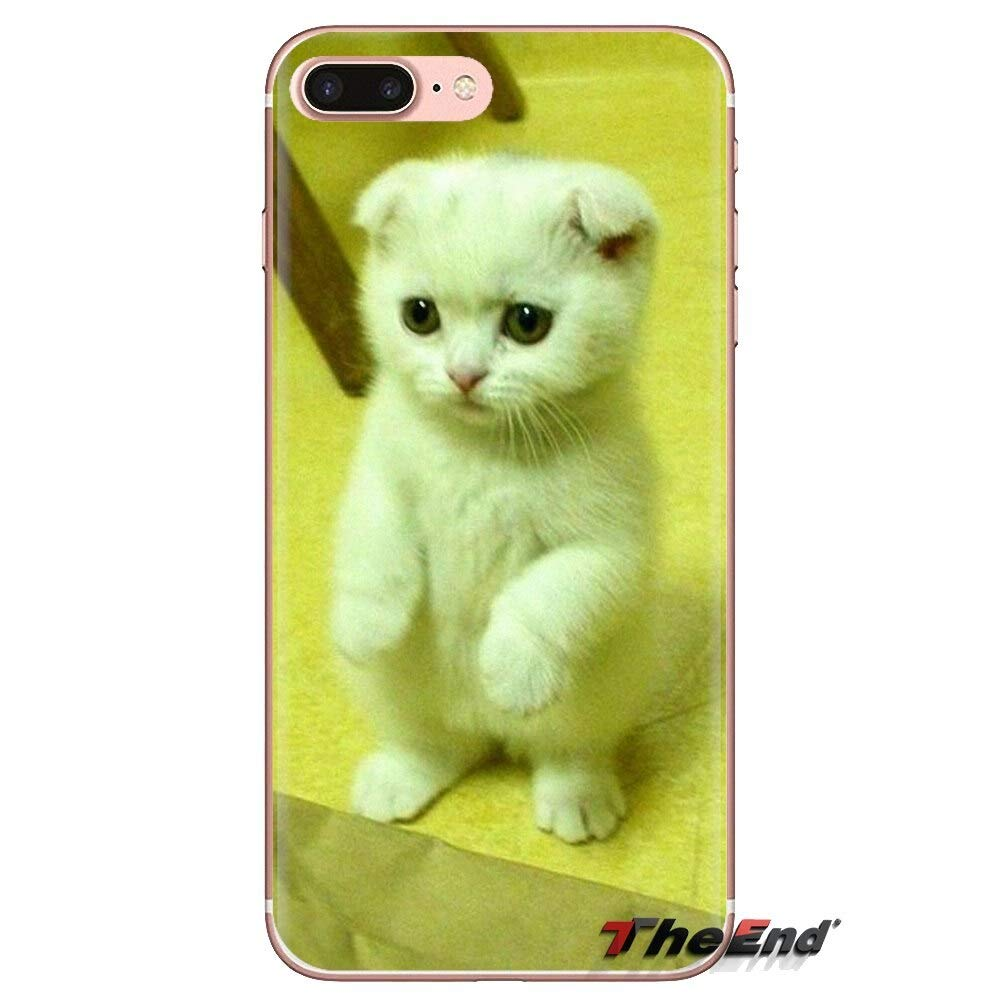 1000007865323 Inspired by Scottish Fold Phone Case Compatible WithIphone 7 XR 6s Plus 6 X 8 9 Cases XS Max ClearIphones Cases High Quality TPU Book Gifts Paso Chihuahuas