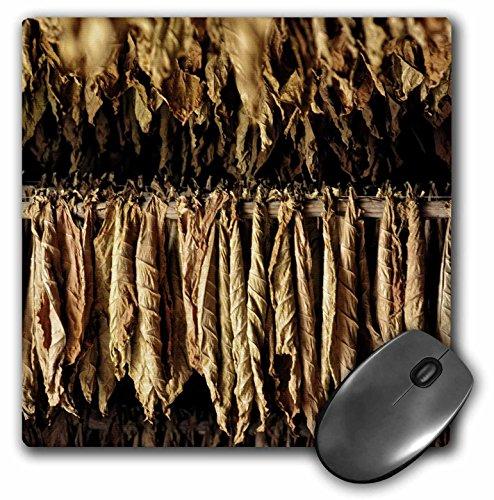 Price comparison product image 3D Rose Dry Tobacco Leafs In A Plantation In Pinar Del Rio In Cuba Matte Finish Mouse Pad - 8 x 8 - mp_219791_1