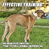 GAITY PET Dog Prong Collar Training Metal Gear