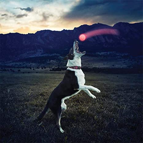 LeKing Pelota de Entrenamiento para Perros Luminosa Perro ...