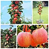 Solution Seeds Farm Rare Hierloom Bonsai Apple Tree Seeds Garden Yard Outdoor Living Fruit Plant, 10 Seeds, healthy delicious nutrition fruits (SEEDS) Not Plants
