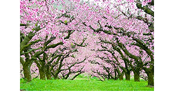 Spring Blooming Trees Archway Backdrop 10x6.5ft Polyester Beautiful Flower Trees Green Grassland Park Scenery Background Wedding Celebration Party Banner Bridal Shower Bride Groom Shoot Wallpaper