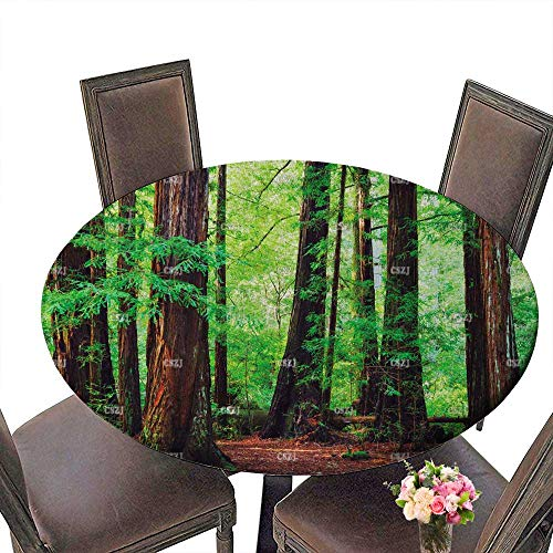 PINAFORE Chateau Easy-Care Cloth Tablecloth Stock Photo Redwood Trees in Forest Northwest rain Forest for Home, Party, Wedding 43.5