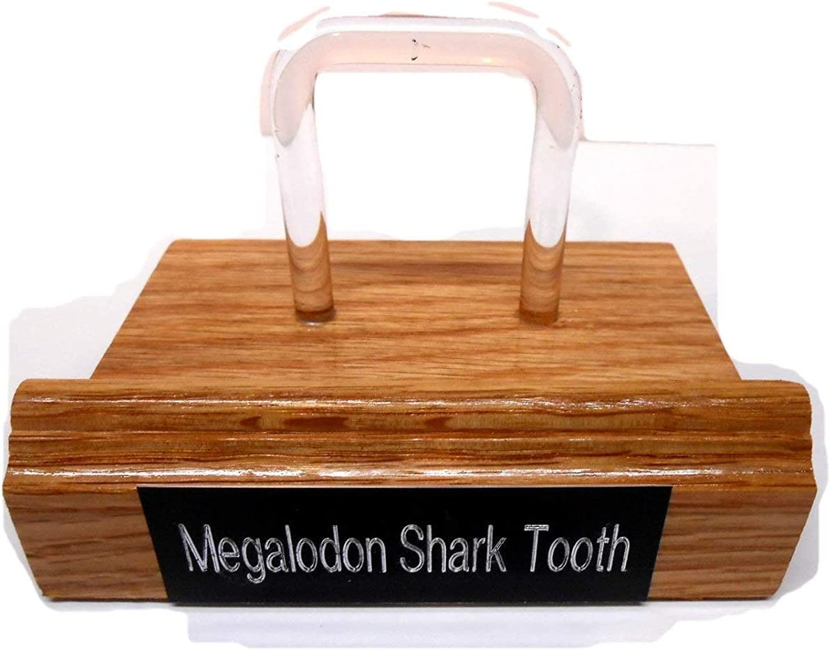 Rockhound's 1st Choice Red Oak & Acrylic Display Stand for Megalodon Shark Tooth Made in USA
