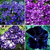 Plentree Petunia Garden Bonsai Moon Night Sky Double Purple Flowers Purple Sky Black