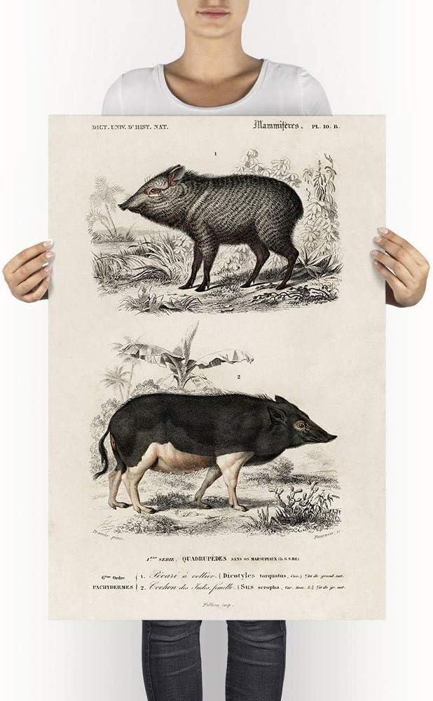 Boar Child Gift Vintage Animal Decor Boar Decor Animal Home Decor Boar Father Gift E18/_116 Boar Poster Boar Print