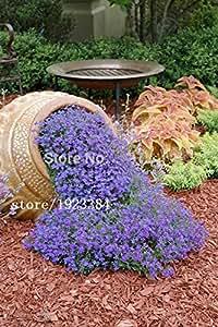 100pcs Cress,Aubrieta Cascade Purple FLOWER SEEDS, Deer Resistant Superb perennial ground cover,flower seeds for home garden