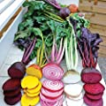 Park Seed Rainbow Mix Beet Seeds