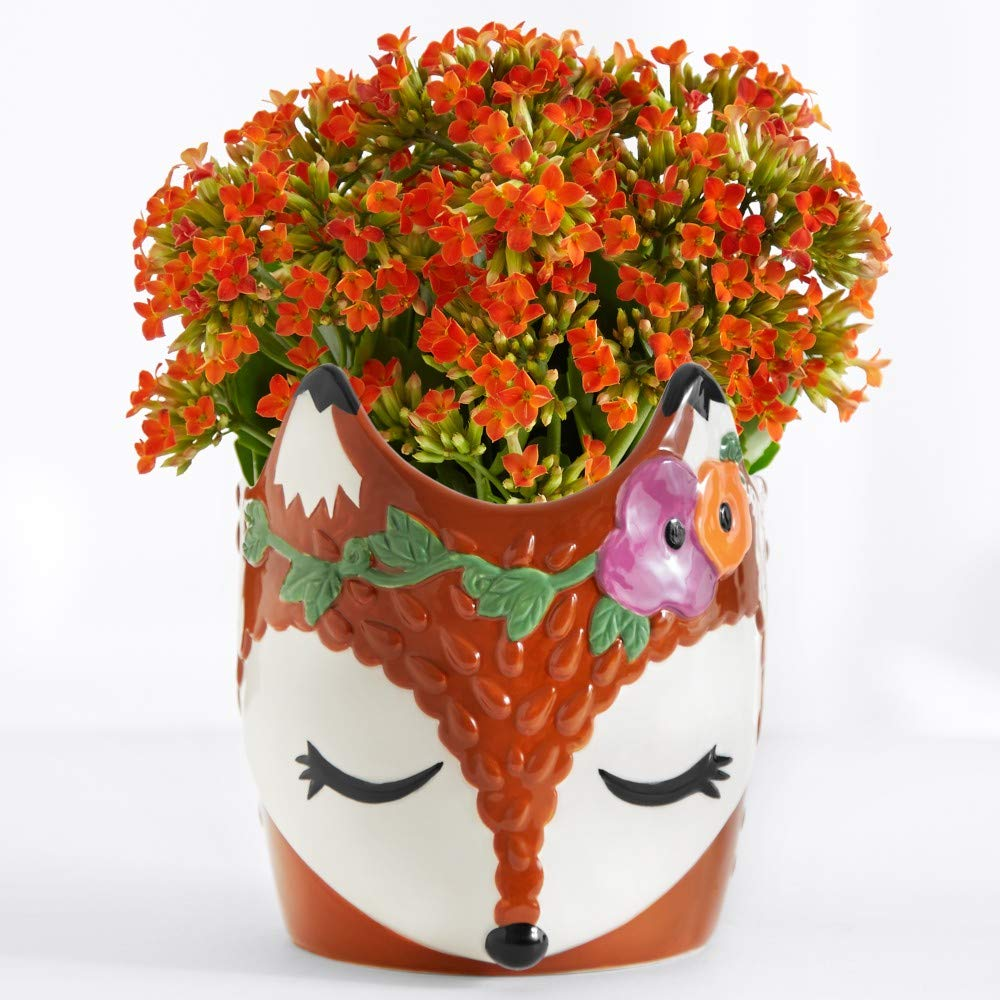 Amazon com : ProFlowers - Multi-Colored Foxy Fall Kalanchoe