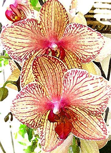 Imagekind Orchids 2 by Jane Schnetlage