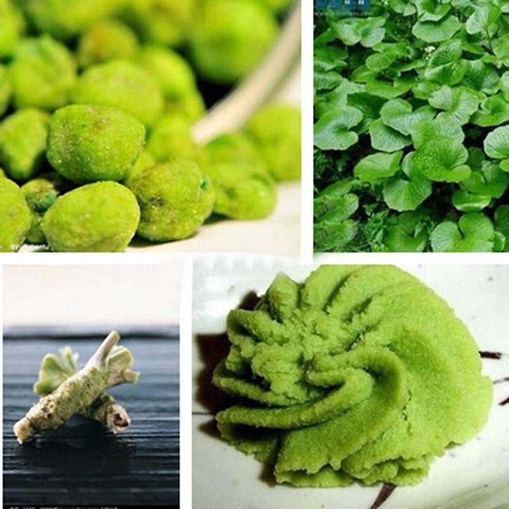 Tomasa Gartensamen 100 st/ücke Wasabi Samen BIO Kr/äuterpflanze Wasabi Samen Japanischen Meerrettich Samen Seltener Gem/üsesamen Garten
