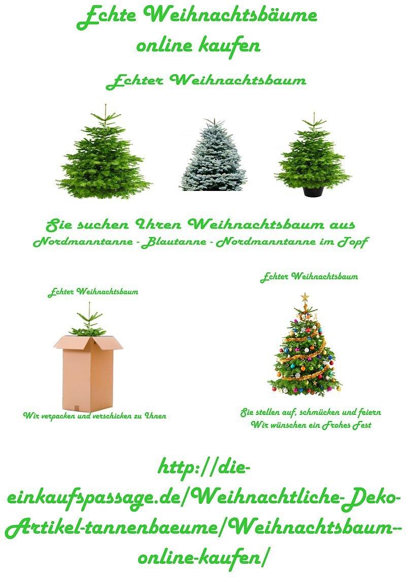 Echter Weihnachtsbaum Klein Nordmanntanne 1 Wahl 100 130 Cm