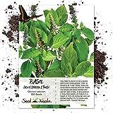 Seed Needs, Holy Basil / Tulsi Herb (Ocimum sanctum) 500 Seeds Non-GMO