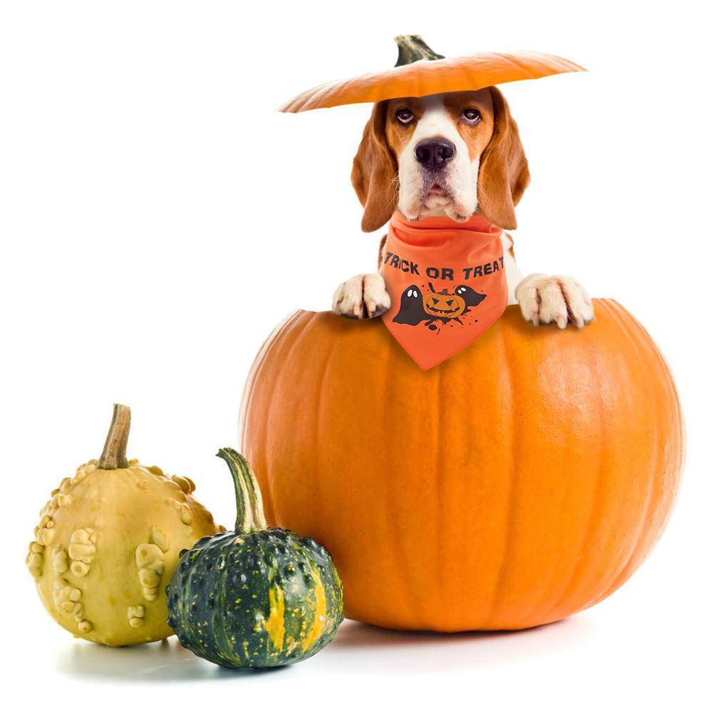 Amazon.com : HOMIMP Dog Bandana Halloween - Trick or Treat - Pet Triangle Scarf Festive Pumpkin for Puppies : Pet Supplies