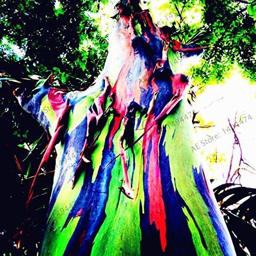 Gro/ßer Verkauf 100pcs//bag Hawaii-Regenbogen-Eukalyptus-Baum-Samen hohe Keimungrate sch/öner Zier-Baum freies Verschiffen
