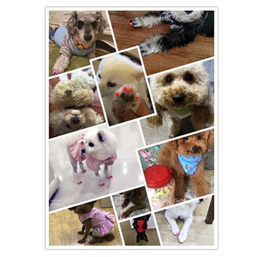 V-Hao Dog Nail Covers 100PCS Dog Nail Caps Soft Claw Covers to Protect Furniture 5 Random Colors + 5 Pcs Adhesive Glue