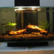 Amazon Com Fluval Edge Aquarium Set Burnt Orange 6