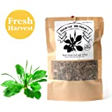 EidolonGreen Plantain Leaf/Wild Plantago L, Bulk(Loose) Herb Cut and Sifted, (cheqiancao/车前草) Natural 100% Health Tea(3 oz)