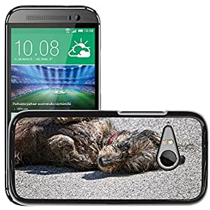 Hot Style Cell Phone PC Hard Case Cover // M00116118 Dog Wet Rolling Shake Water Pet // HTC One Mini 2 / M8 MINI / (Not Fits M8)