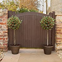 Save up to 44% on live plants from YouGarden