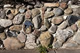 Vintography 8 x 12 Photo A Creative Stone Wall in which The Creator Embedded Various Everyday Objects, Including Tools V.1923
