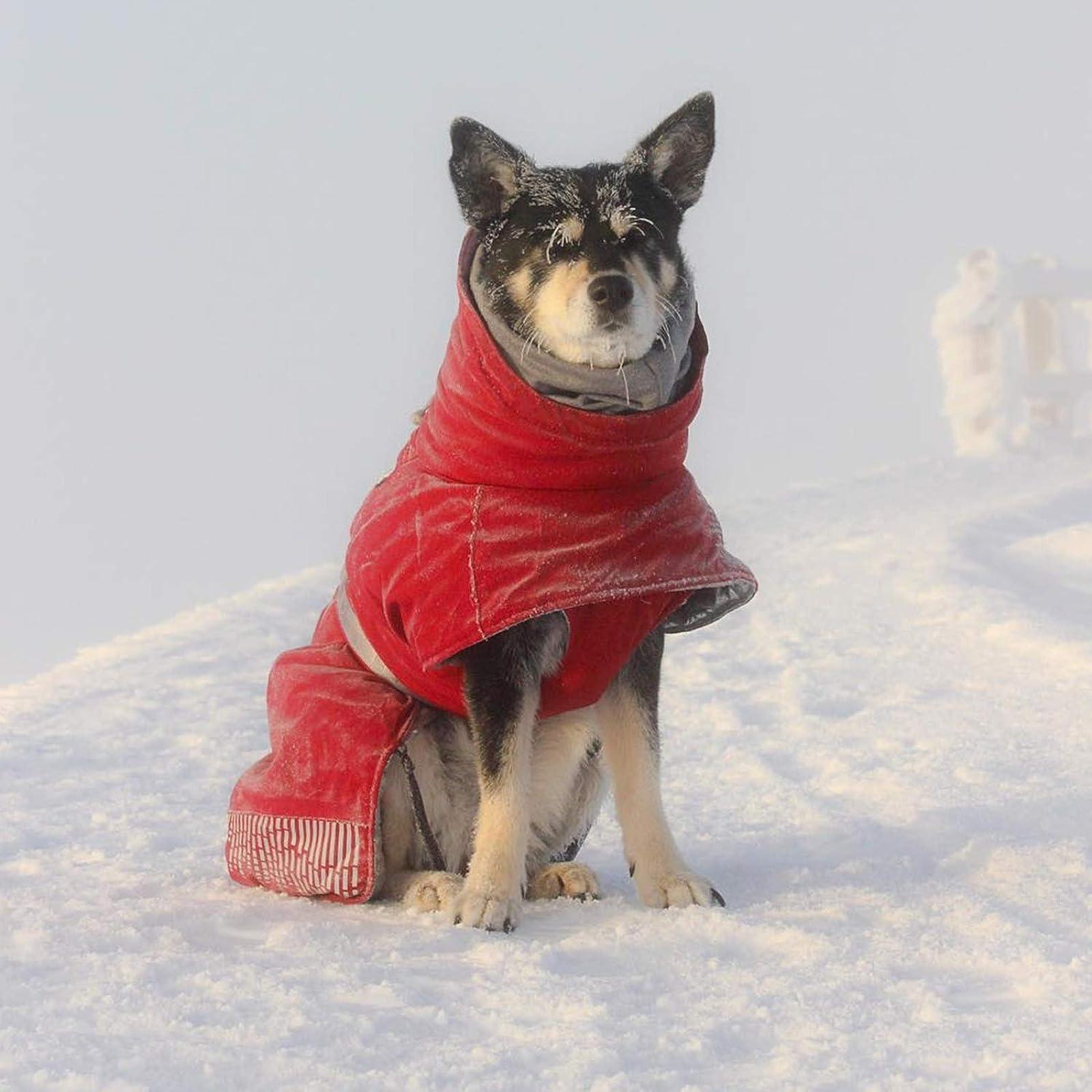 Hurtta Extreme Warmer Dog Winter Jacket Lingon HU932968 - 2
