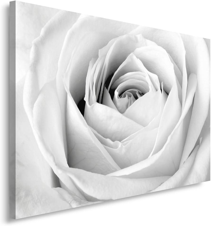 Feeby Frames, Cuadro en Lienzo, Cuadro impresión, Cuadro decoración, Canvas 80x120 cm, Rosa Blanca