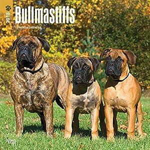 Bullmastiffs 2018 Wall Calendar