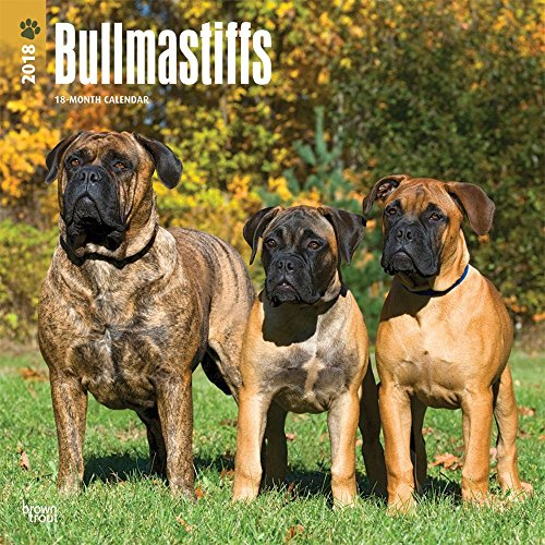 Bullmastiffs 2018 Wall Calendar