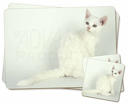 White American Wire Hair Cat Twin 2x Placemats+2x Coasters Set in ...