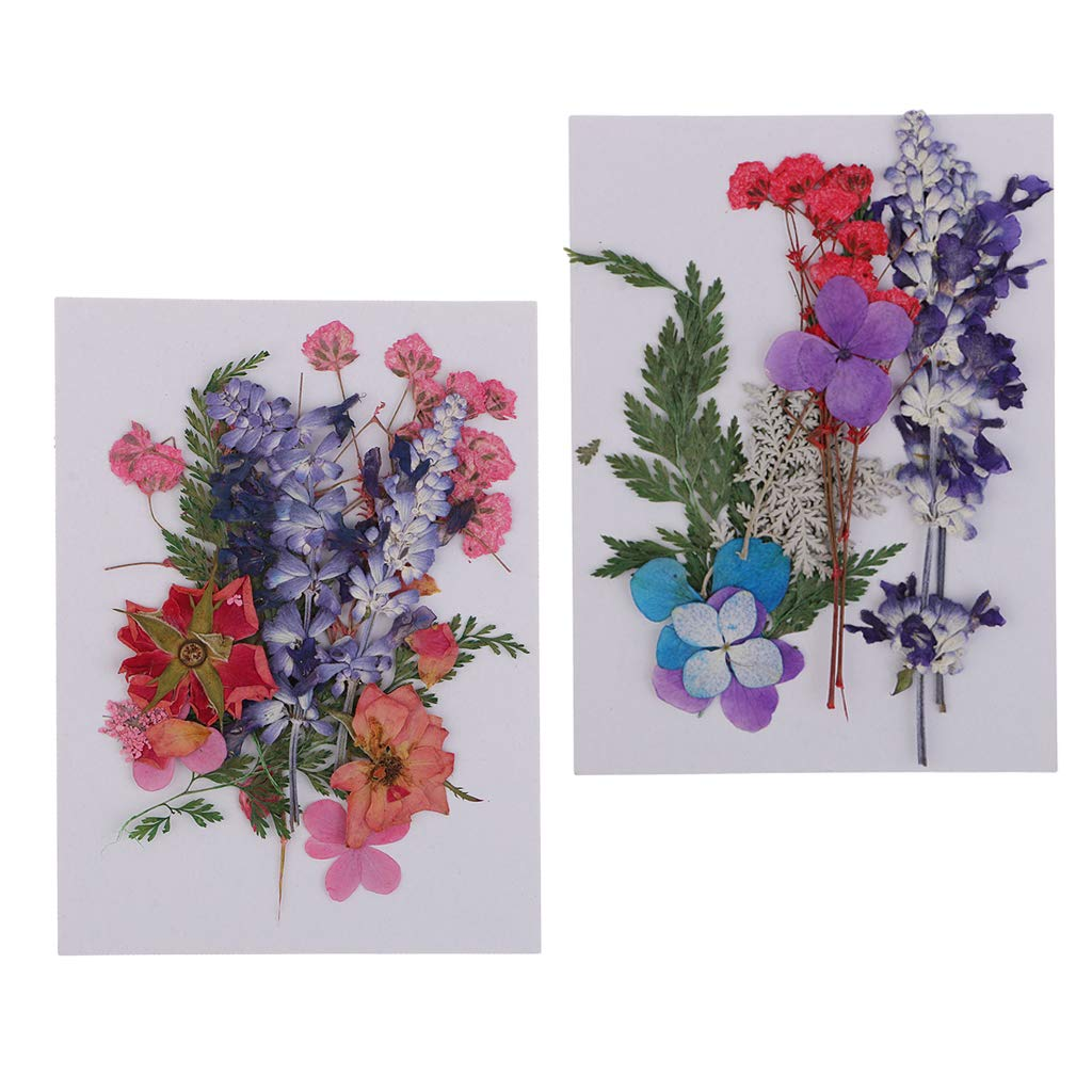 Fityle 2 Pack Multiple Beautiful Real Pressed Flower Dried Flowers for Art Craft Scrapbooking Resin Jewelr Making Handmade Dried Flower Phone Case